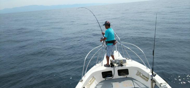 毎日釣れています