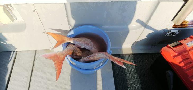 初真鯛で78㎝