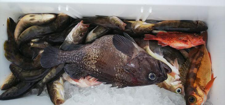 根魚、五目釣りでした!